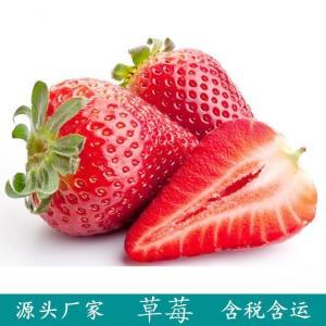 草莓果粉 喷雾干燥 水溶草莓粉
