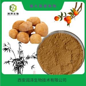 猴头菇水溶粉 猴头菇水提粉 水溶性猴头菇提取物