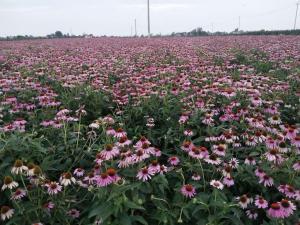 宁夏六盘山种植基地